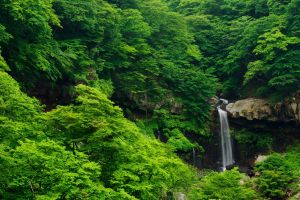 forest landscape waterfall tropical forest nature
