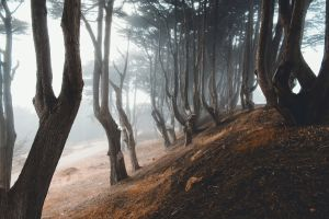 forest mist trees nature hills dirt