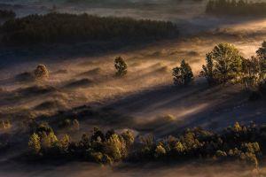 forest morning landscape mist trees sunlight nature