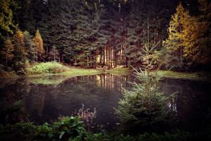 forest nature lake water