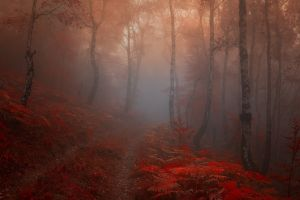 forest nature red leaves mist color correction birch
