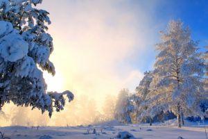 forest nature snow landscape