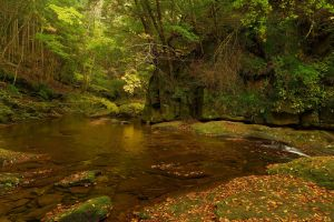 forest nature wilderness creeks river fallen leaves