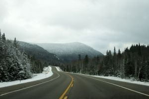 forest overcast landscape winter road