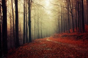 forest path fallen leaves mist nature