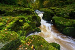 forest river green fall rocks moss nature stream