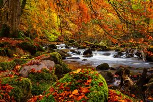 forest river nature plants