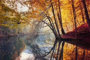 forest river red leaves turkey reflection colorful fall nature yellow mist landscape trees water