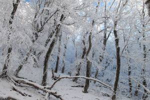forest snow nature frost landscape winter