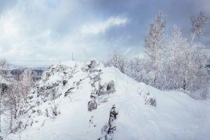 forest snow nature landscape