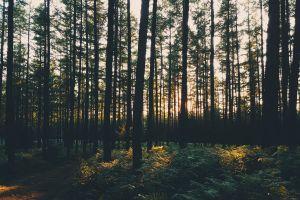 forest sun sunset trees photography exploration nature landscape