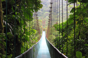 forest suspension bridge nature jungle bridge