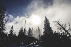 forest trees clouds snow