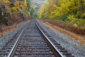 forest trees fall railway
