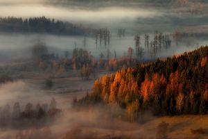 forest trees hills fall mist nature landscape