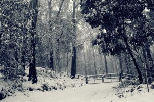 forest winter snow mist