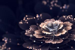 fractal cgi fractal flowers digital art