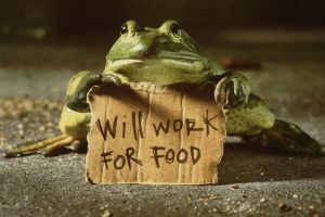 frog quote humor