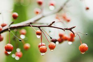 fruit plants water drops macro