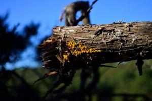 fungus wood depth of field