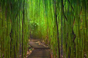 garden bamboo japanese garden
