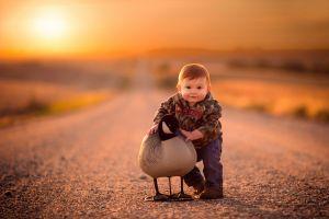 geese jake olson road birds children nature depth of field