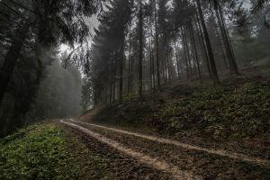 germany landscape nature hills dark mist morning road forest trees