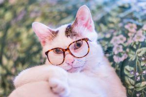 glasses pet animals cats