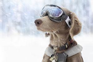 goggles dog winter snow