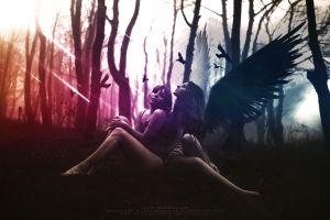 graphic design wings photo manipulation angel birds