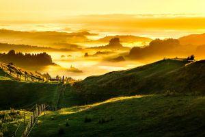 grass field sunlight landscape mist new zealand clouds forest trees nature hills fence