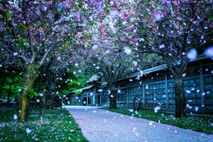 grass flowers abstract snow trees path spring nature park landscape blossom
