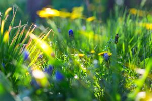 grass flowers depth of field sunlight nature blue flowers bokeh macro