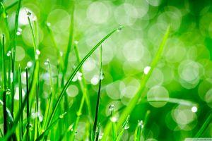 grass macro nature water drops