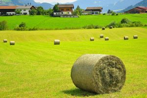 grass mountains hay house haystacks field alps landscape trees hills nature forest austria
