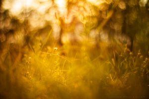 grass outdoors plants