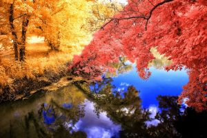 grass reflection water fall landscape trees calm pink nature blue yellow colorful lake