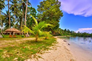 grass sand beach tropical nature sunshade chair sea boat palm trees landscape