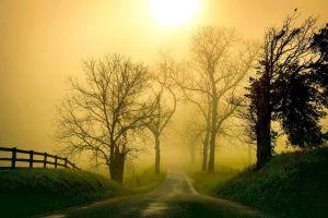grass sunlight nature trees road mist landscape morning fence