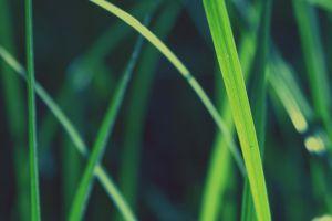green macro photography plants nature
