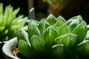 green macro plants flowerpot