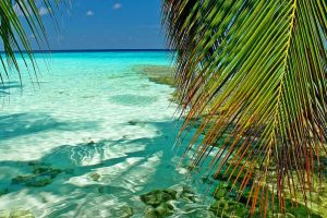 green maldives landscape beach atolls nature turquoise tropical leaves palm trees sea summer