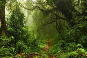 green moss landscape trees sunlight nature forest path