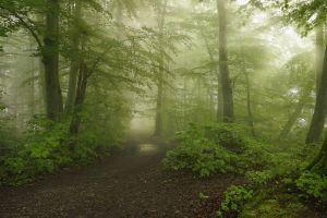 green spring path shrubs morning landscape trees mist nature moss sunlight dirt road forest