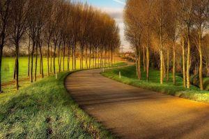 hdr landscape road nature trees
