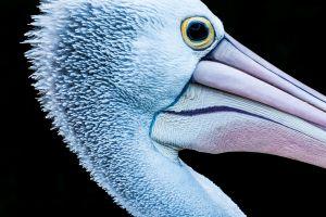 herons animals closeup birds