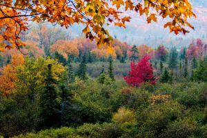 hills branch pine trees nature trees colorful forest fall leaves
