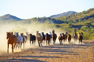 horse animals dust nature dirt