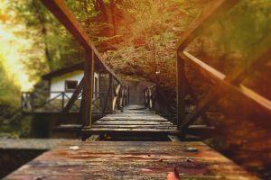 house forest landscape bridge nature