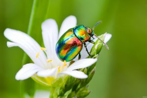 insect animals nature